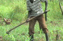 New Nation of Southern Sudan Seeks to Develop Agriculture