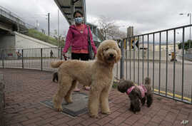 A woman wearing face mask, walks her dogs in Hong Kong, March 5, 2020.