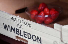 Tennis - Wimbledon - All England Lawn Tennis and Croquet Club, London, Britain - July 5, 2019  General view of strawberries …