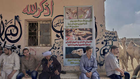 Camel herders at the market sit below a poster warning against mistreatment of the animals. Some of the vendors, in response to growing criticism on social media, insist not all herders and sellers are the same. (VOA/H. Elrasam)