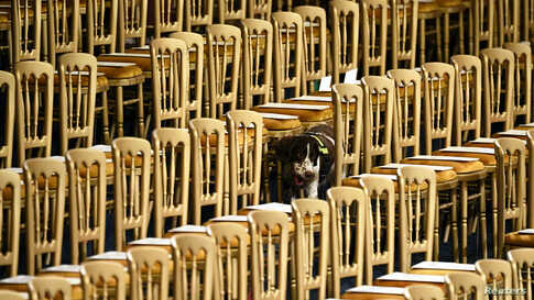 A search dog patrols the Royal Gallery ahead of the State Opening of Parliament at the Palace of Westminster in London.