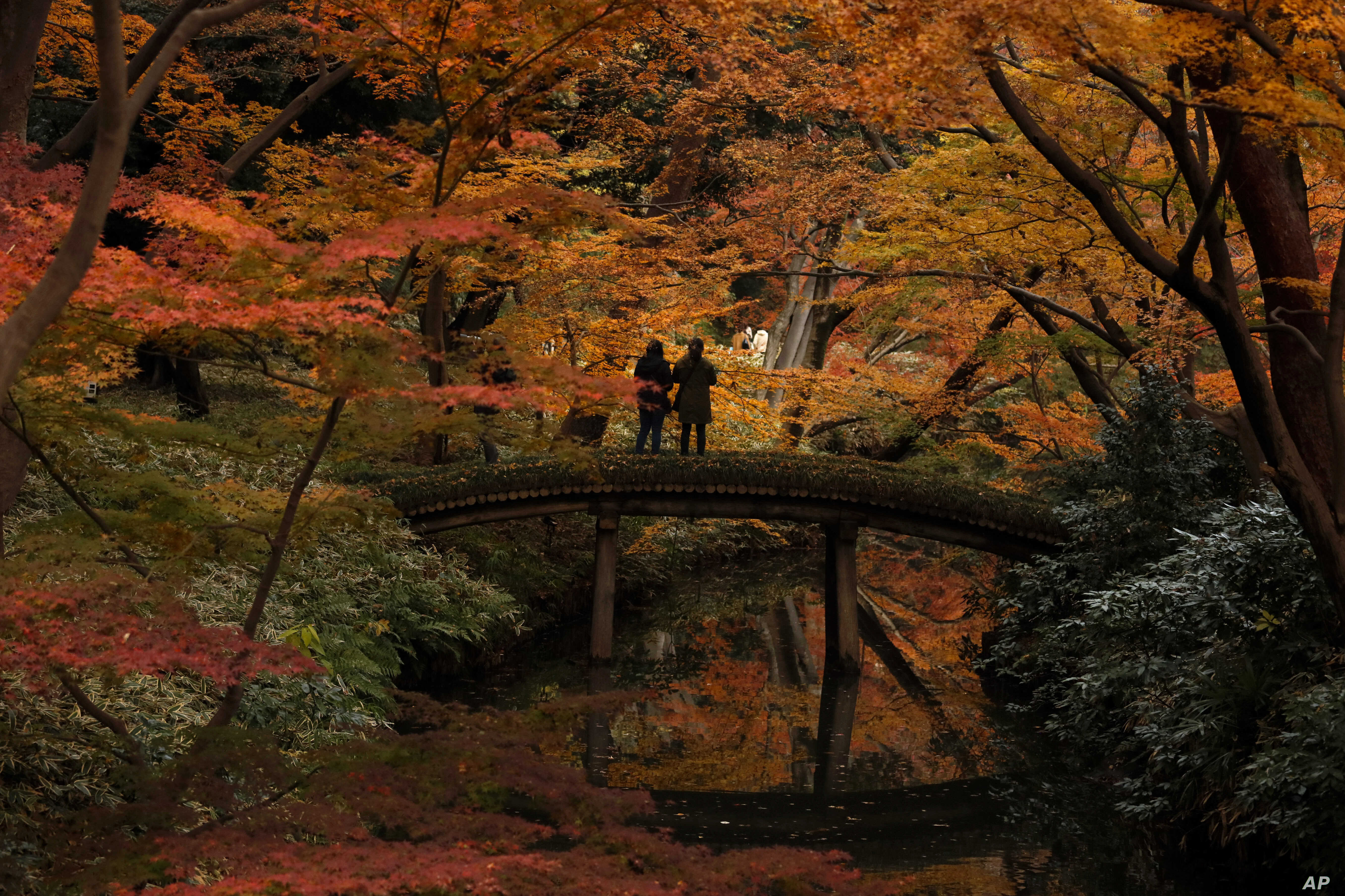 Visitors take pictures of autumn leaves at Rikugien Garden in the Bunkyo district of Tokyo, Japan.