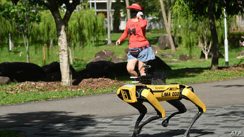 A woman jogs past a four-legged robot called Spot, which broadcasts a recorded message reminding people to observe safe…