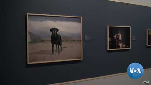 Exhibit Remembers Canine Contribution to 9/11 Rescue Efforts