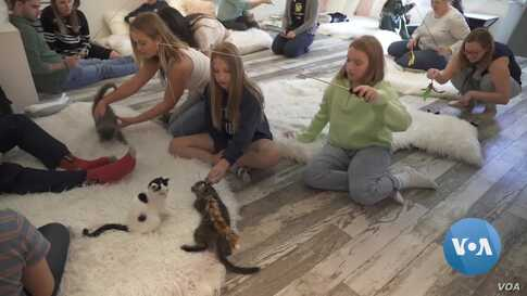 Kitten Lounge Offers Play Time with Kittens and Hopefully Adoptions