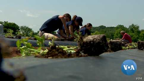 Successful Company Gives Back By Running a Community Farm
