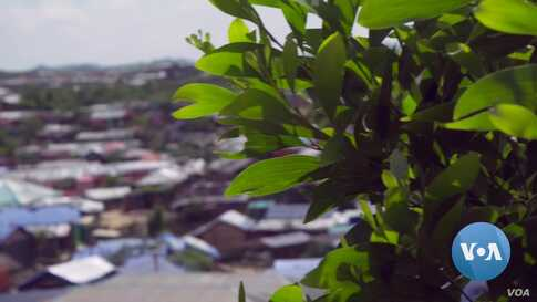 Rohingya Refugees Face More of Uncertainty