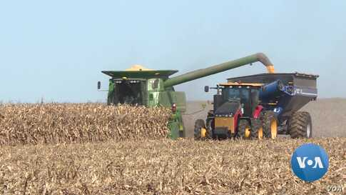 US Farmers Harvest Crops amid Trade, Impeachment Uncertainty