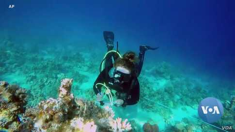 Coral Reef Resilient to Climate Change Threatened by Tourists