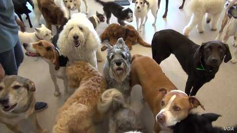Dogs Go on Vacation to Luxury Pet Resort