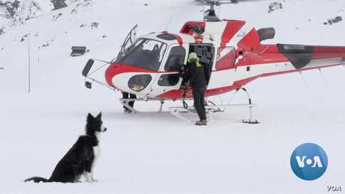 Valiant Canines Train for Snow Rescue Operations