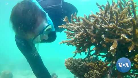 Back to Back Heat Waves Devastate Indian Ocean Coral