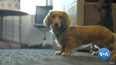 Want a Happy Workplace? Add Dogs!