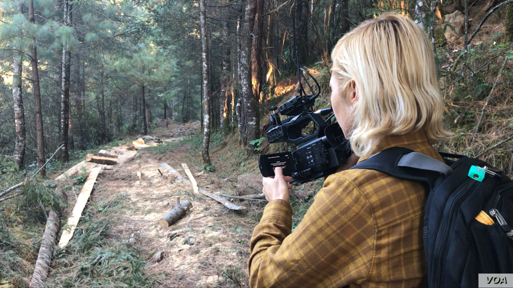 VOA Films Illegal Logging Inside Mexico Monarch Butterfly Sanctuary