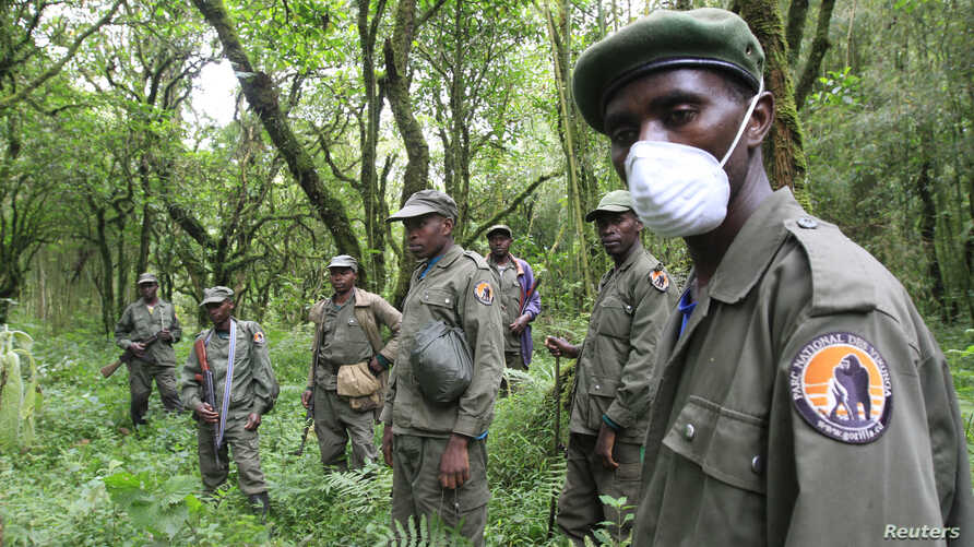 Park wardens stand by as they bring tourists to see mountain gorillas in Virunga National Park in the Democratic Republic of Congo, near the border town of Bunagana, Oct. 21, 2012.