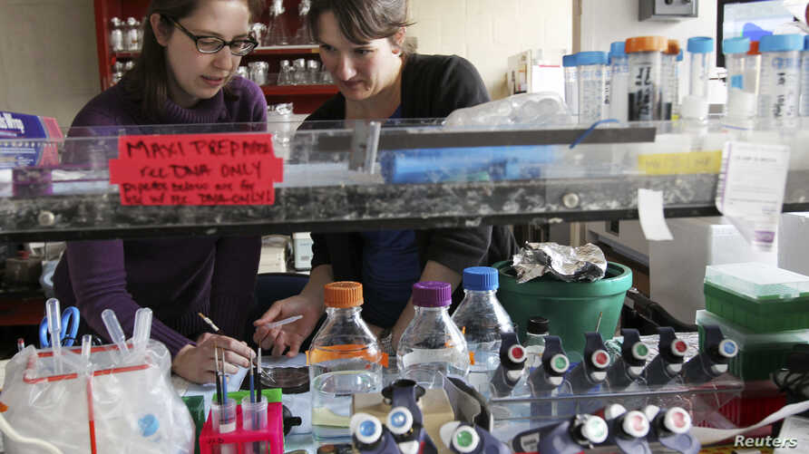 FILE - Researchers conduct reproductive physiology tests in a lab at the University of Washington Medical Schools' Health Sciences Center in Seattle, March 16, 2011. The research program has relied on the National Institutes for Health to underwrite