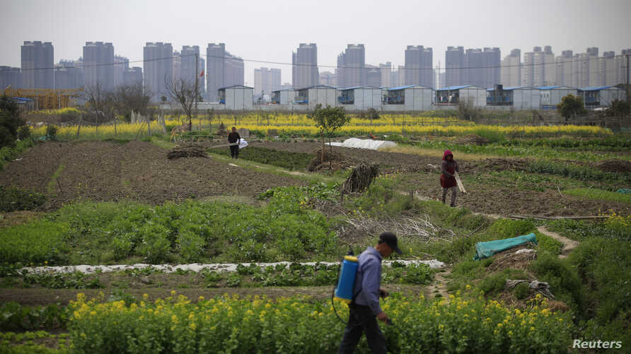 A farmer works on a farm in front of a construction site of new residential buildings in Shanghai, China, March 21, 2016.
