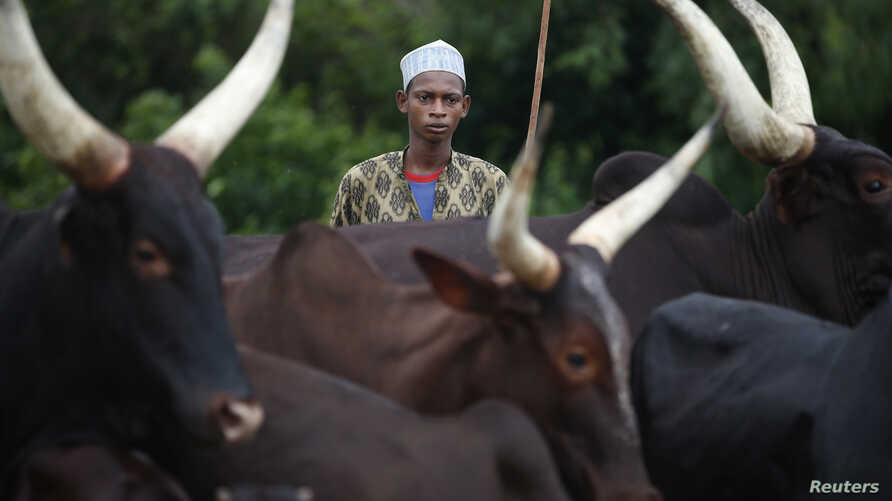 FILE - A man from the Peul tribe stands in front of cattle at a village outside Bambari May 30, 2014.