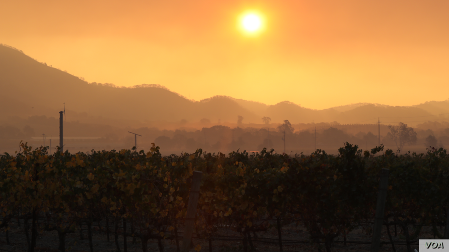 The sun rises over an abandoned vineyard in Sonoma County, Calif., as wildfires continue to spread throughout the region, Oct. 12, 2017.