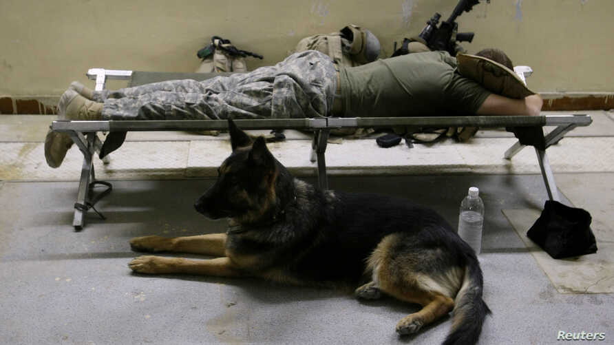 FILE - A U.S. soldier from the Second Stryker Cavalry Regiment tries to sleep next to a dog at the Diyala media center in Diyala province, Aug. 6, 2008.