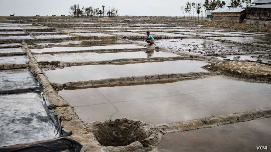 Salt fields have come to replace paddy fields in Kutubdia. (J.Owens/VOA)