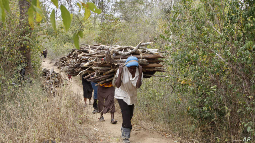 FILE -Women walk out of the forest carrying wood to use for cooking, in Tsavo East, in Kenya, June 20, 2014. Environmental crime such as the poaching of elephants for ivory and the selling of illegal charcoal is helping to finance criminal, militia a