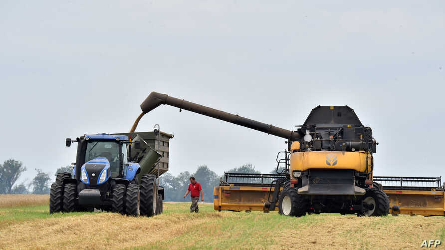 FILE - A man walks in a field as grain is being poured from a combine harvester into a tractor in the village of Mala Divytysa, Chernihiv region, Ukraine, July 27, 2015.