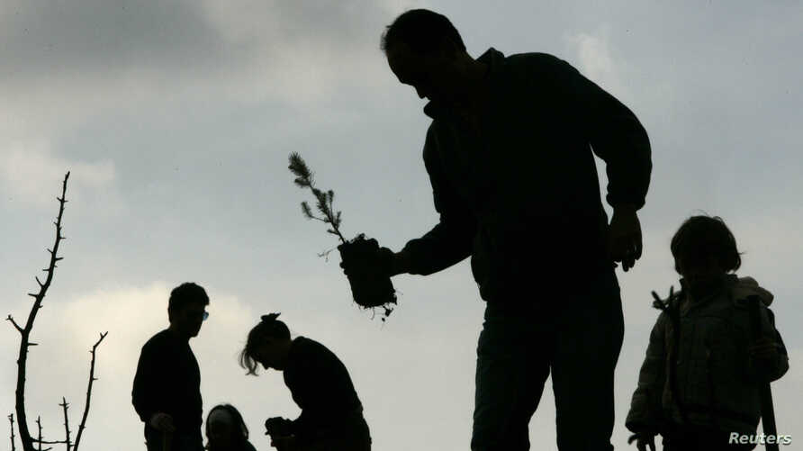 FILE - People plant pines during a reforestation project on Penteli mountain, north of Athens, Jan. 13, 2008.