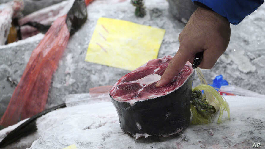 A prospective buyer inspects the quality of a frozen tuna before the first auction of the year at the newly opened Toyosu Market, new site of Tokyo's fish market, in Tokyo, Jan. 5, 2019.