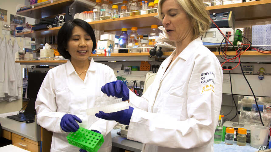 UC Berkeley scientists Jennifer Doudna, right, and her lab manager, Kai Hong, work with revolutionary technology that lets scientists learn to rewrite genetic code, Berkeley, Calif., June 20, 2014.
