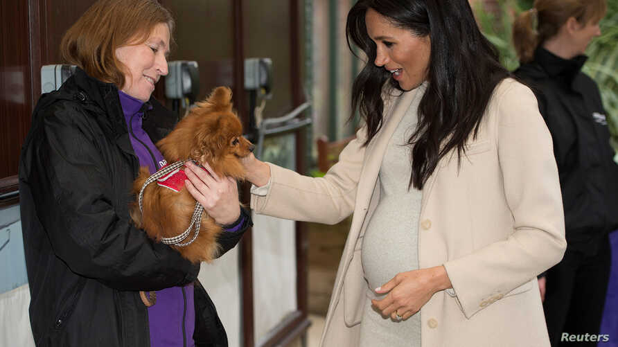 """Meghan, Duchess of Sussex meets """"Foxy"""" during a visit to the animal welfare charity Mayhew in London, Britain, Jan. 16, 2019."""