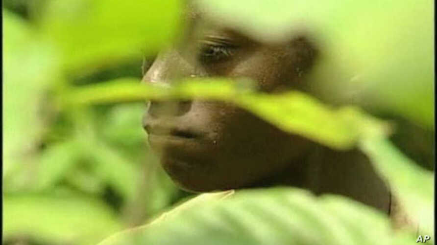 A young man working in a cocoa field in Africa.