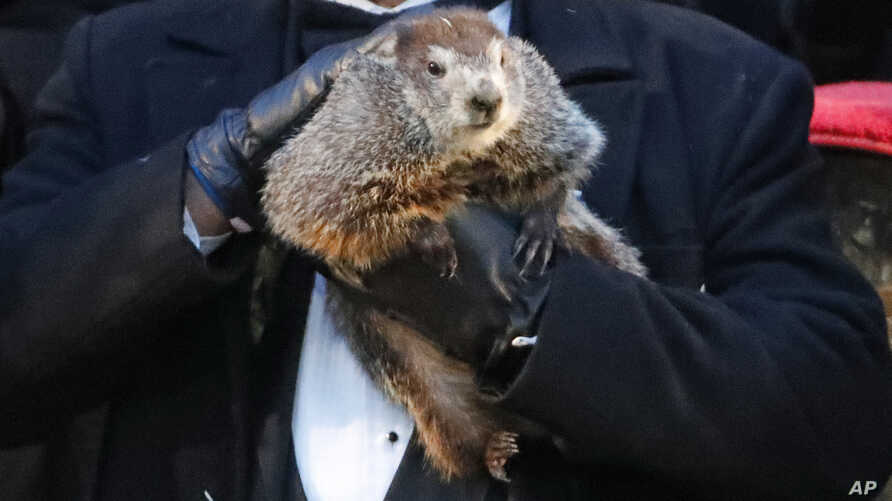 Groundhog Club co-handler John Griffiths holds Punxsutawney Phil, the weather prognosticating groundhog, during the 132nd celebration of Groundhog Day on Gobbler's Knob in Punxsutawney, Pa., Feb. 2, 2018. Phil's handlers said that the groundhog forec