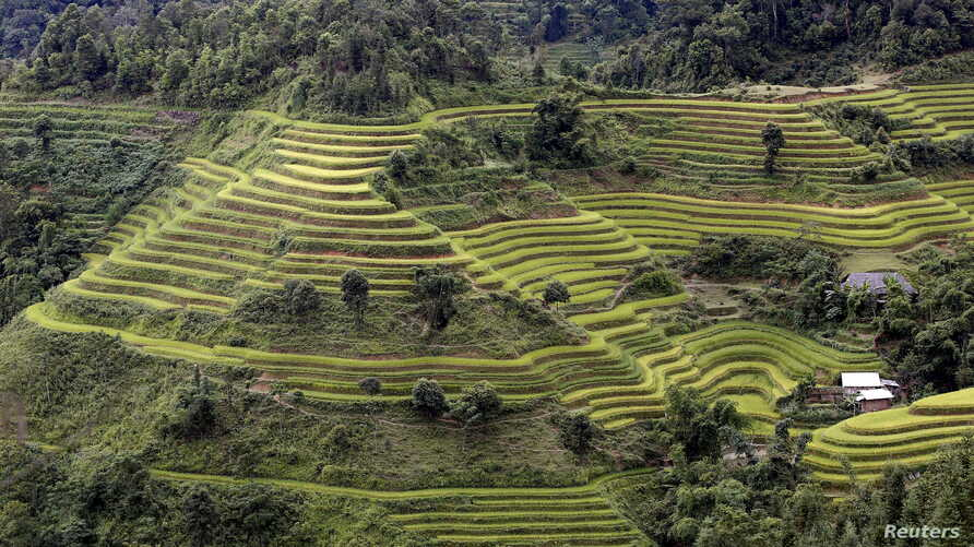 Terraced rice paddy fields are seen during the harvest season in Hoang Su Phi, north of Hanoi, Vietnam, Sept. 18, 2015.