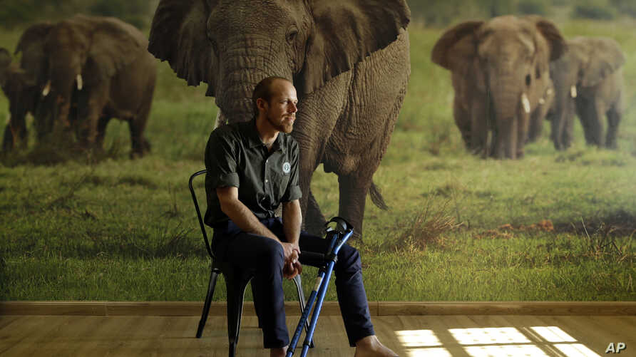 In this photo taken Monday, May 23, 2016, Erik Mararv, the manager of the Garamba National Park in Congo, is photographed against a poster backdrop of elephants during an interview with The Associated Press in Johannesburg, while recuperating from hi