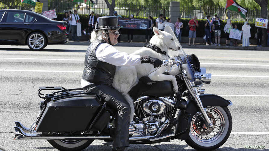 FILE - Jeremiah Gerbracht rides his Harley Davidson motorcycle with his dog on Wilshire Boulevard in Los Angeles, California.