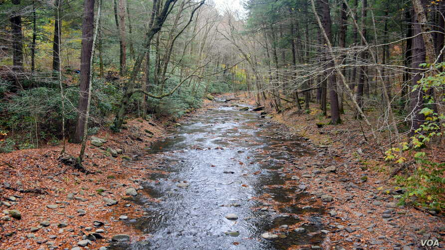A heavy rainstorm resulted in a swollen creek on the way to the popular Dingmans Falls at Delaware Water Gap National Recreation Area in Pennsylvania.