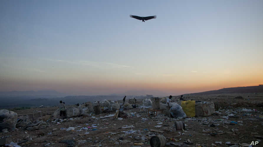 FILE - A vulture flies over now closed Jardim Gramacho landfill in Rio de Janeiro, Brazil, May 29, 2012.