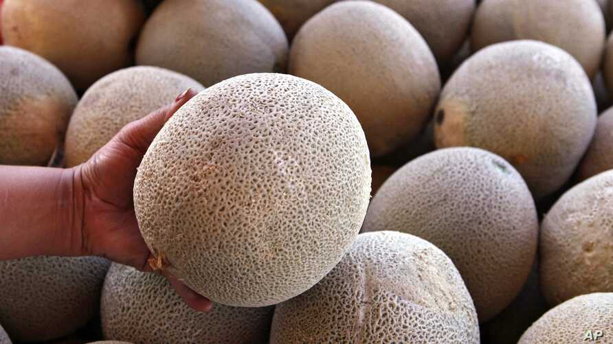 FILE - A produce vendor holds a California-grown cantaloupe at her business near Denver, Sept. 16, 2011. The fruit, also known as rockmelon, muskmelon and other names, is the source of a listeria outbreak in Australia.