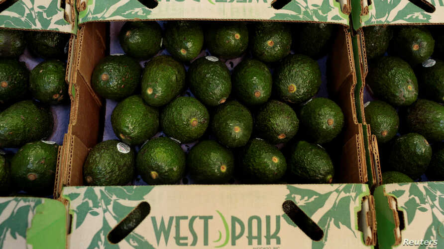 Avocados are seen at a packaging warehouse of La Joya de los Magueyes plantation in Tancitaro, in Michoacan state, Mexico, Jan. 28, 2017.