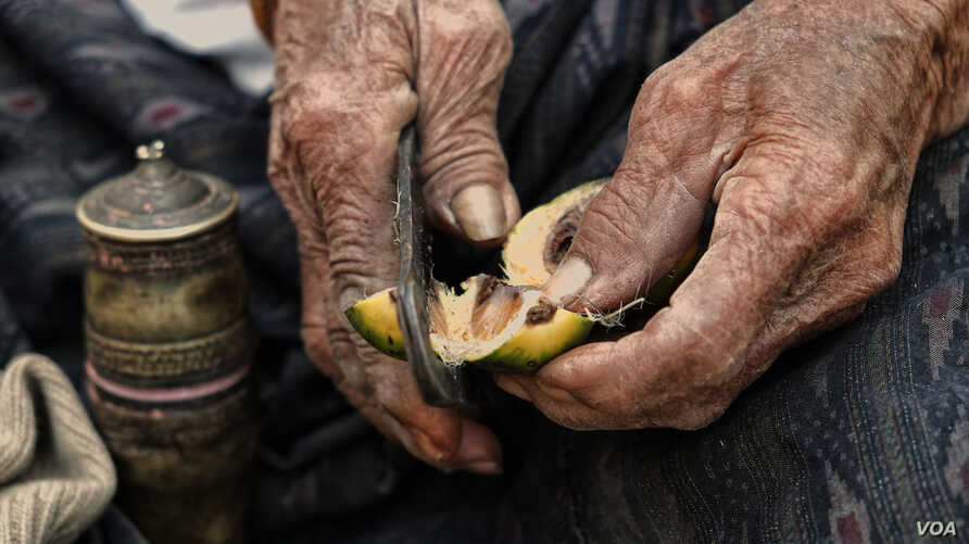 A 90-year-old Thai woman uses a pair of traditional metal cutters to slice open an areca nut that she will then chew mixed with betel leaf and lime paste to form a mild stimulant. (Photo taken by Matthew Richards/Thailand/VOA reader)