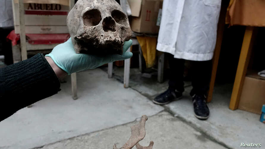 Archeologists show a skull as part of an archeological finding, dated approximately 500 years ago, in Mazo Cruz, near Viacha, Bolivia, Nov. 12, 2018.