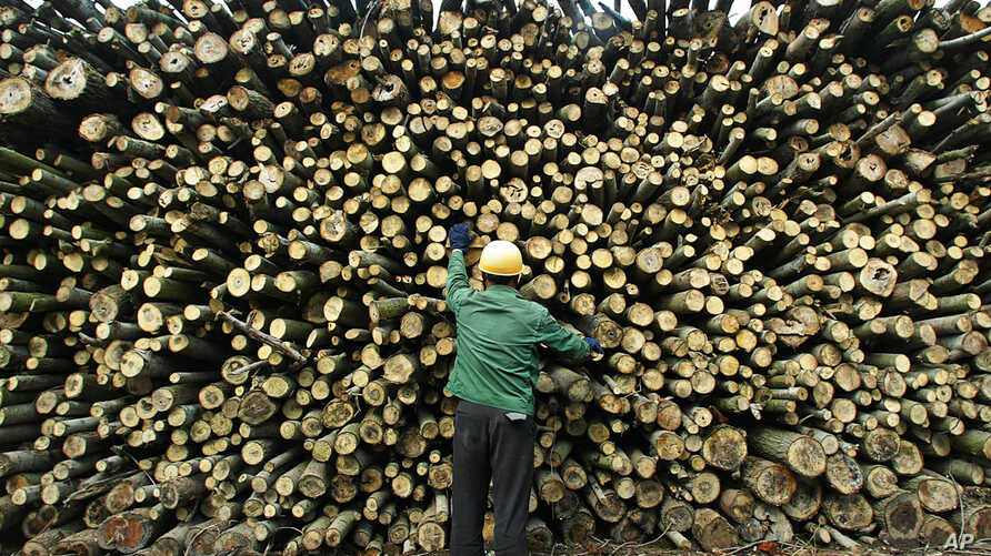 A worker inspects timber quality in a wood yard in Yuanjiang, in China's central Hunan Province. China has become the world's leading importer of wood from developing countries such as Indonesia and Papua New Guinea where illegal logging is common. A