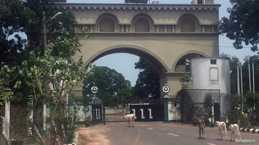 Cattle amble toward an archway at the entrance of former Gambian President Yahya Jammeh's estate in Kanilai, Gambia July 1, 2017.