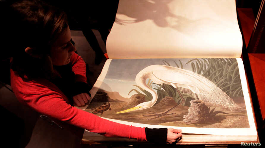 "FILE - A Sotheby's employee turns a page of John James Audubon's ""Birds of America,"" at Sotheby's in London, Dec. 6, 2010."