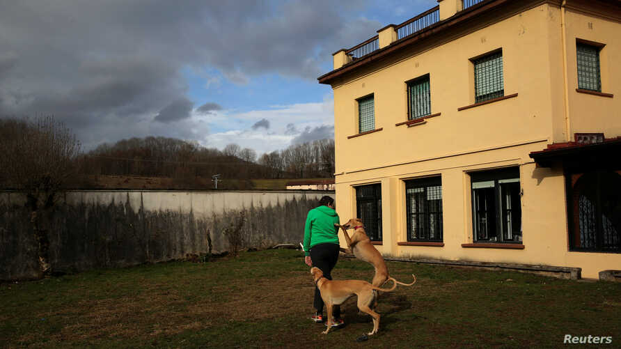 Atila and Argi, trained therapeutic greyhounds used to treat patients with mental health issues and learning difficulties, try to get the attention of Ion Albiz, 38, at Benito Menni health facility in Elizondo, northern Spain, Feb. 13, 2017.