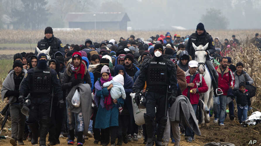 Escorted by police,  migrants move through fields after crossing from Croatia, in Rigonce, Slovenia, Tuesday, Oct. 27, 2015.