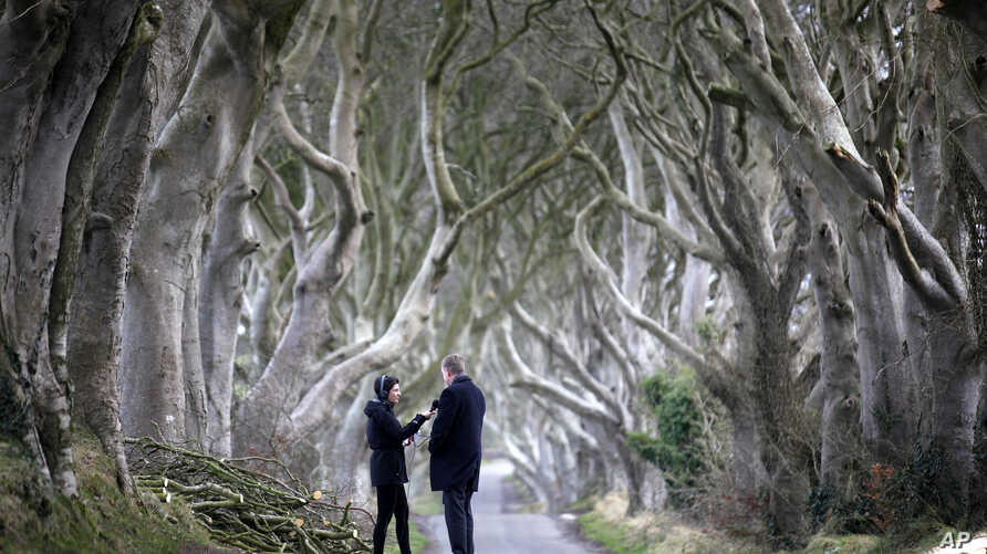 A journalist interviews a local politician after two beech trees were bought down by a storm near Ballymoney, Northern Ireland, Jan. 29, 2016.