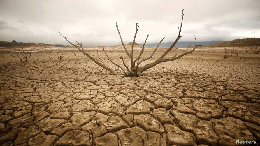Dried-out branches are seen amongst caked mud at Theewaterskloof dam near Cape Town, South Africa, Jan. 20, 2018.
