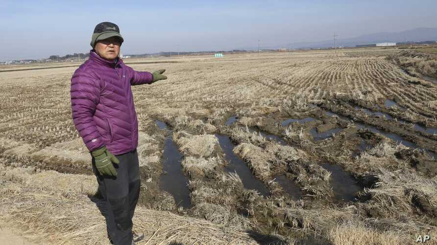 FILE - Chung Young-chul shows his rice field during an interview in Seosan, South Korea.  Chung takes a drag on his cigarette and watches as wild ducks fly across rice fields and land on a reservoir in this remote farming village, Feb. 21, 2017. He's
